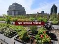 Terrace Farming Care – কীভাবে করবেন ছাদ বাগানের পরিচর্যা, জেনে নিন ছাদবাগানের রোগ পোকা নিয়ন্ত্রণ ব্যবস্থা