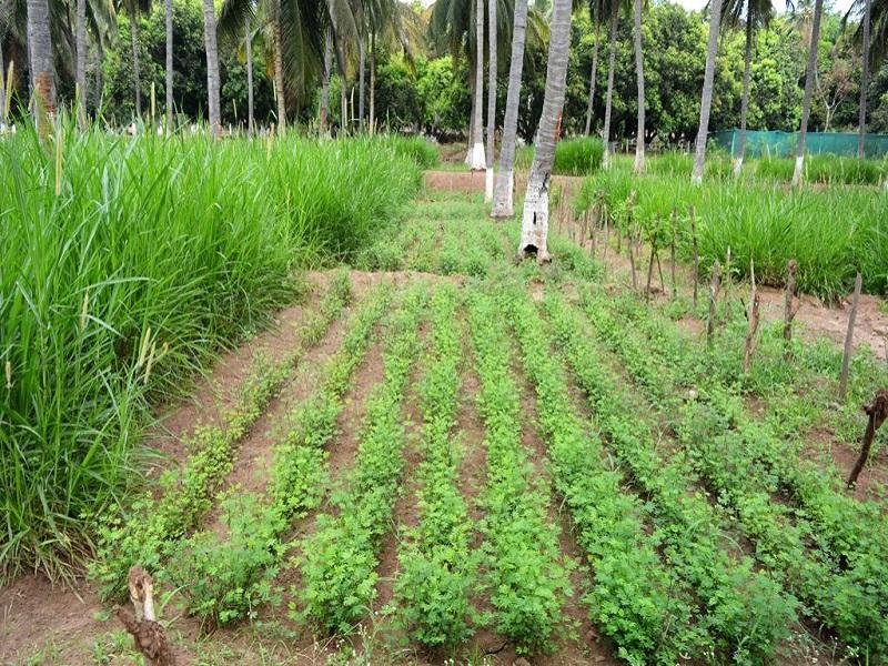 Integrated farming (image credit- Google)