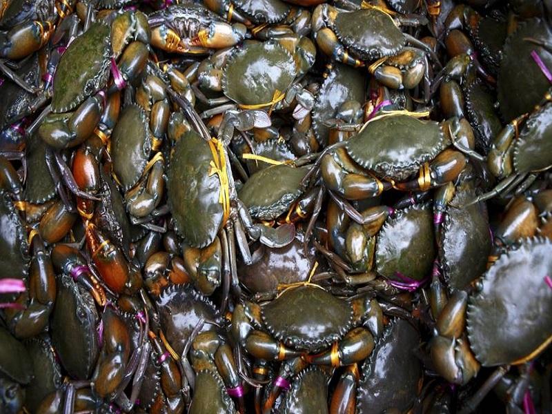 Crab farming (image credit- Google)
