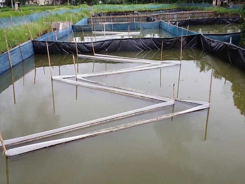 Periphyton based aquaculture (image credit- Google)