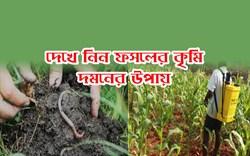 Worm control in agricultural field: জেনে নিন কৃমির উপদ্রব থেকে ফসল রক্ষার উপায়
