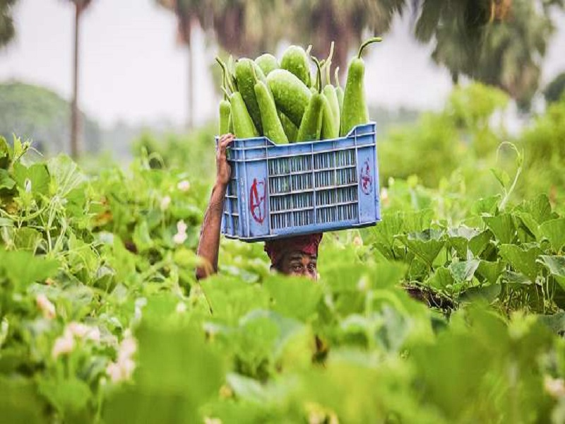 Bangladesh agriculture (image credit- Google)