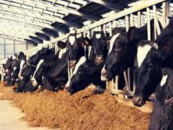 Dairy farm setup: দেখে নিন গাভীর খামার ব্যাবস্থাপনার সম্পূর্ণ খুঁটিনাটি