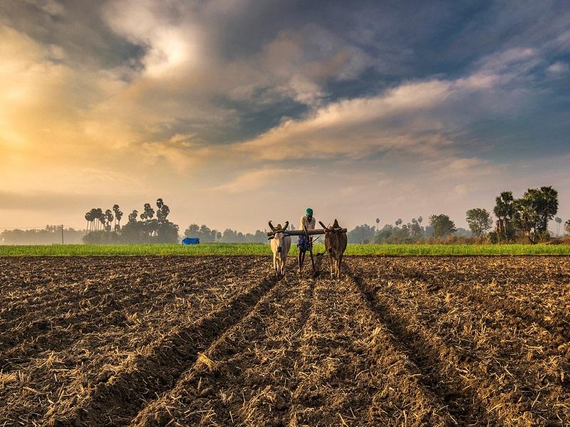 Agricultural report (image credit- Google)