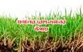 Soil borne diseases of crops: জেনে নিন ফসলের মাটিবাহিত রোগের ক্ষয়-ক্ষতির সমাধান