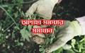 Weed management methods: দেখে নিন ক্ষেতের আগাছা দমন করার উপায়
