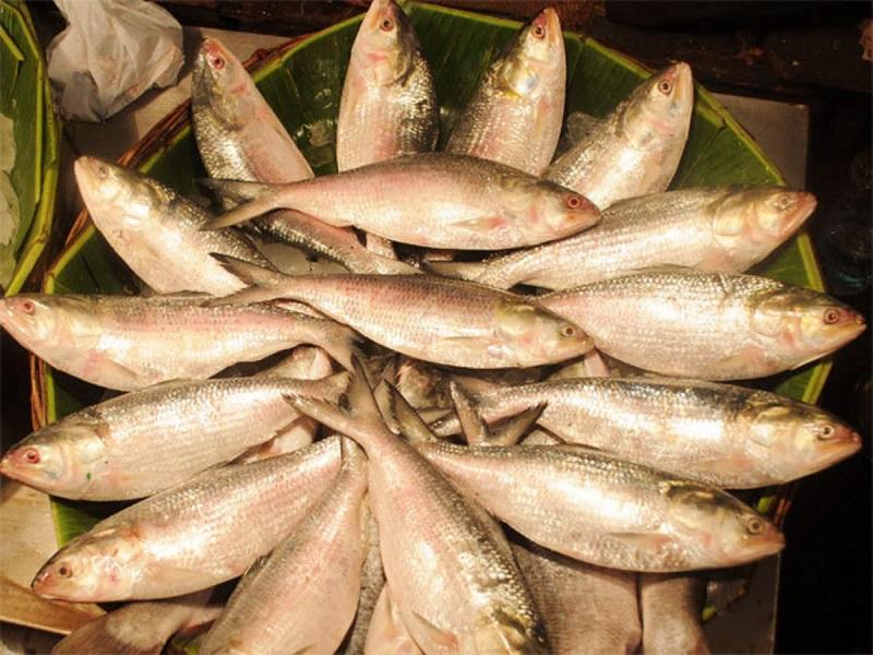 Fish scarcity (image credit- Google)