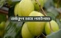 Baukul cultivation: দেখে নিন বাংলাদেশে বাউকুল চাষ করে অধিক উপার্জন করার সুযোগ