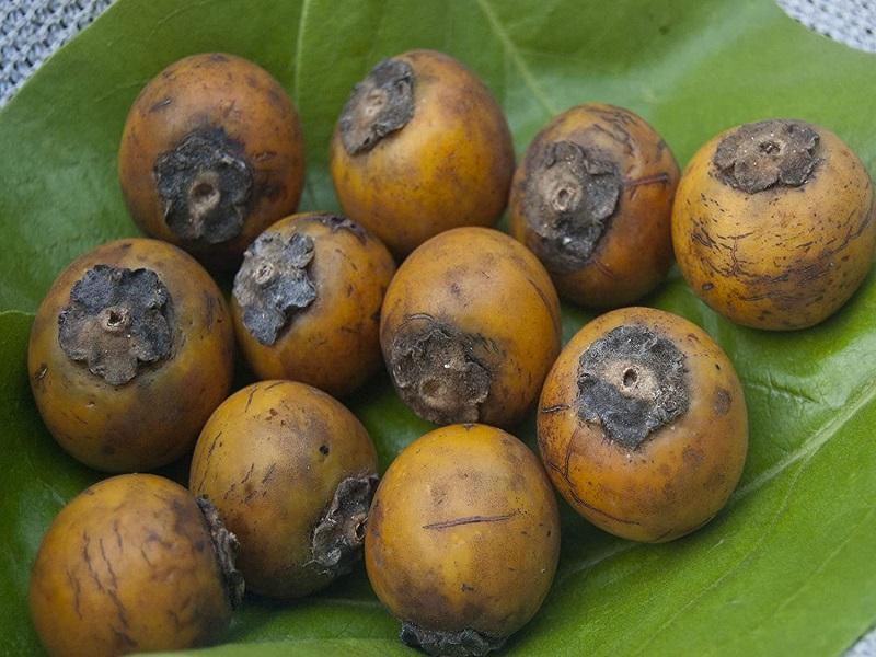 Kendu fruit (image credit- Google)