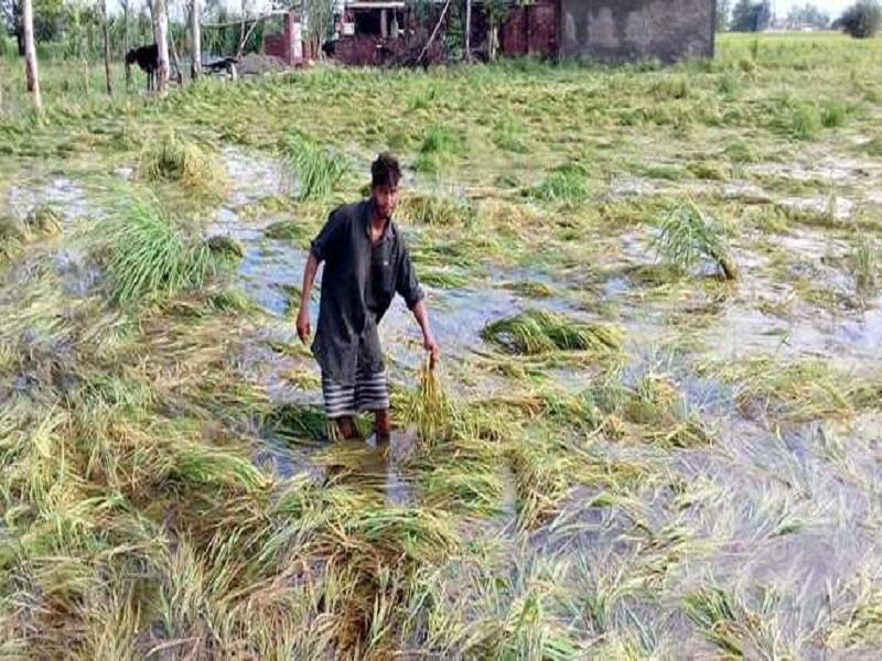 Odisha agriculture (image credit- Google)