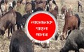 Sheep rearing guide: স্বল্প পুঁজিতে গাড়ল পালনে হয়ে উঠুন লাভবান