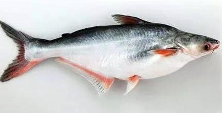 পাঙাশ মাছ
