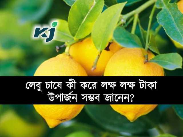 লেবু চাষে (Lemon Farming) ৭ লক্ষ টাকা উপার্জন, কীভাবে সম্ভব হল জানুন আপনিও