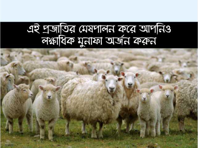 মেষপালন (Sheep Farming) করে আজ লক্ষাধিক মুনাফা অর্জন করছেন এই কৃষক
