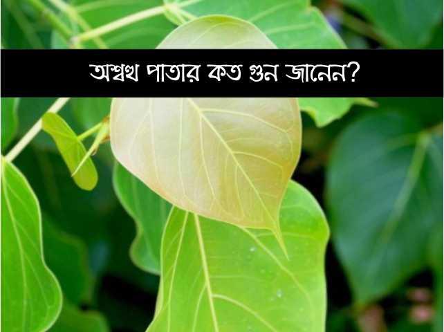 ঔষধি গুনে সমৃদ্ধ অশ্বত্থ পাতা (Benefits of Peepal Leaves) কীভাবে আমাদের উপকার করে জেনে নিন