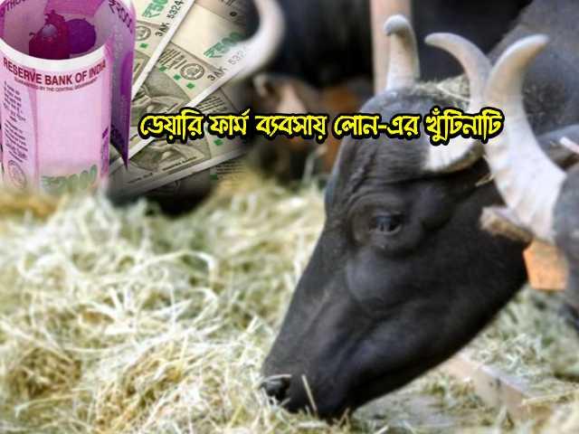 ডেয়ারি ফার্ম বিজনেস করতে চান? লোন (Dairy Farm Business Loan) সম্পর্কে জেনে নিন এখনই