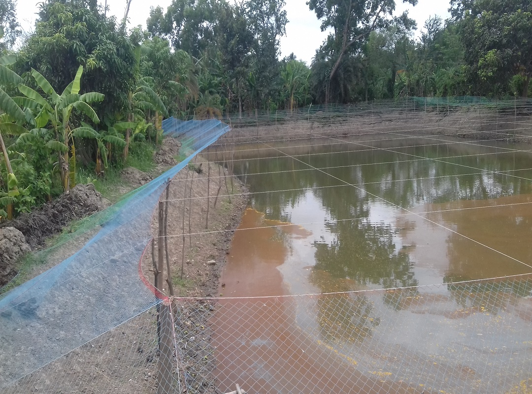 Pond In Good Condition For Fish Farming