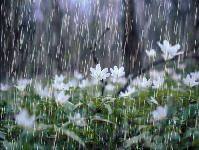 Monsoon Rainfall