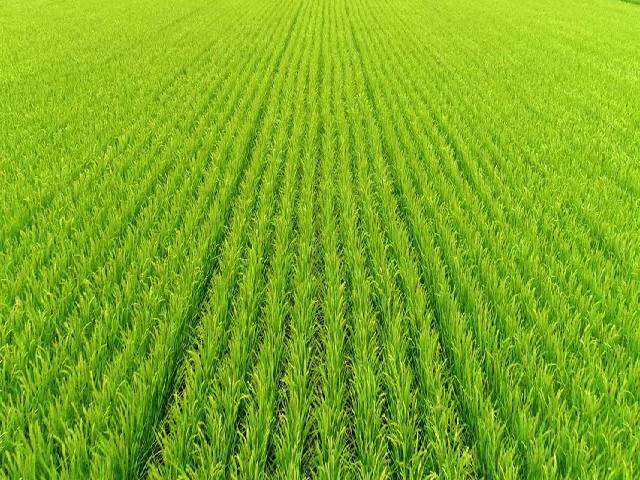 Zero tillage farming