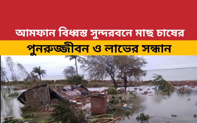 (Fish farming in the Sundarban) আমফান ঘূর্ণিঝড়ে ক্ষতিগ্রস্ত সুন্দরবনে মাছ চাষের পুনুরুজ্জীবনের একটি রূপরেখা