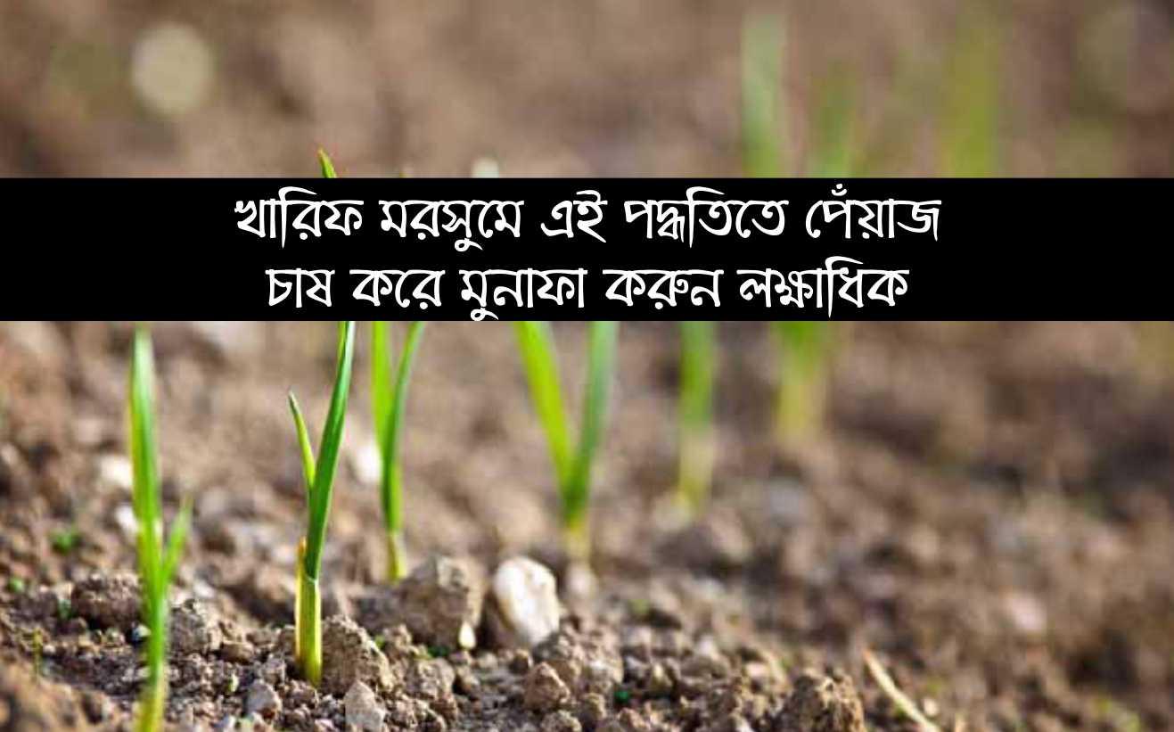 (Profitable onion cultivation) খারিফ মরসুমে পেঁয়াজ চাষ