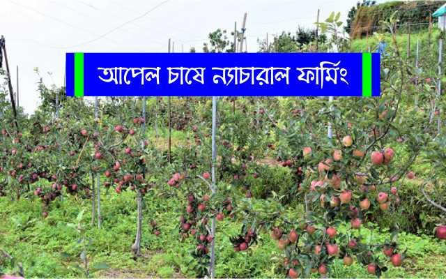 (Natural farming) মুনাফা বেশি, হিমাচল প্রদেশে আপেল চাষীদের নজরে এখন ন্যাচারাল ফার্মিং