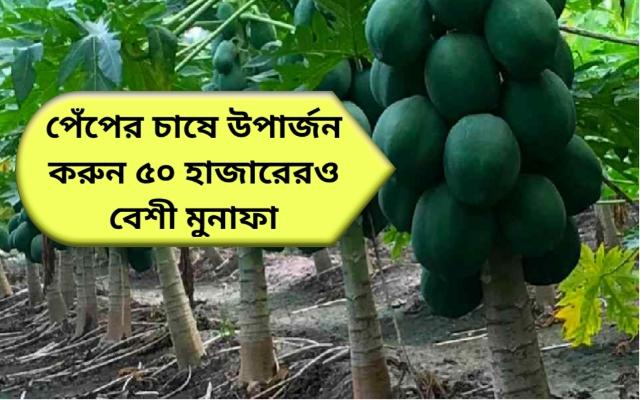 (Papaya Farming) পেঁপের বাণিজ্যিক চাষ করে কৃষক করতে পারেন অতিরিক্ত অর্থ উপার্জন