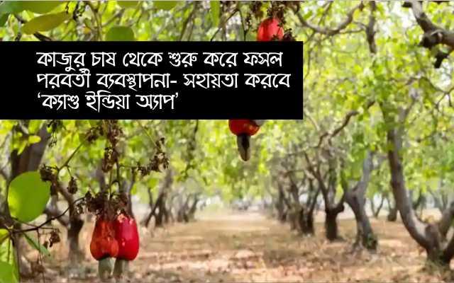(Cashew India App) 'ক্যাশু ইন্ডিয়া অ্যাপ' নিয়ে এল ডিরেক্টরেট অফ ক্যাশু রিসার্চ