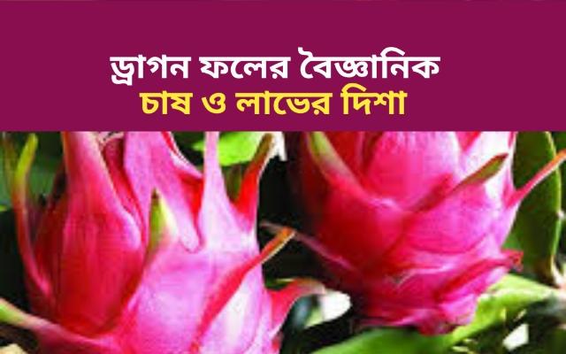 (Dragon fruit cultivation) সর্বরোগহারা ফল -ড্রাগন ফল, লাভজনক ড্রাগন ফল চাষের সম্পূর্ণ তথ্য