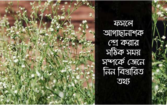 (Herbicides on crops) গুরুত্বপূর্ণ কিছু সবজী ফসলের আগাছানাশক স্প্রে করার সময়সূচী
