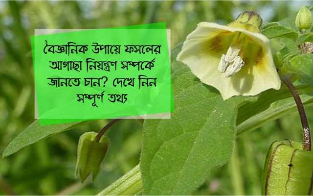 (Management of weeds) সুসংগত উপায়ে ফসলের আগাছা নিয়ন্ত্রণ পদ্ধতি