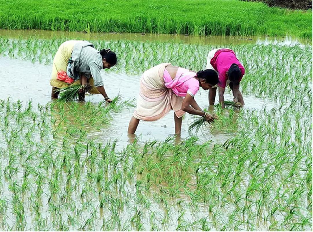 Crop cultivation