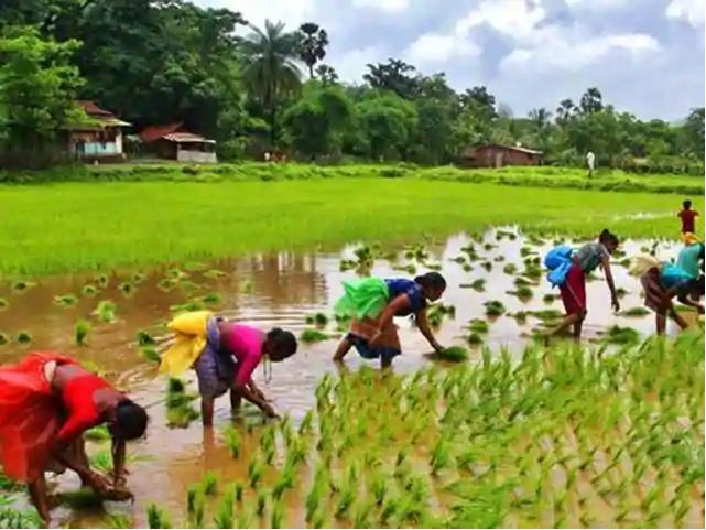Crop Cultivaton