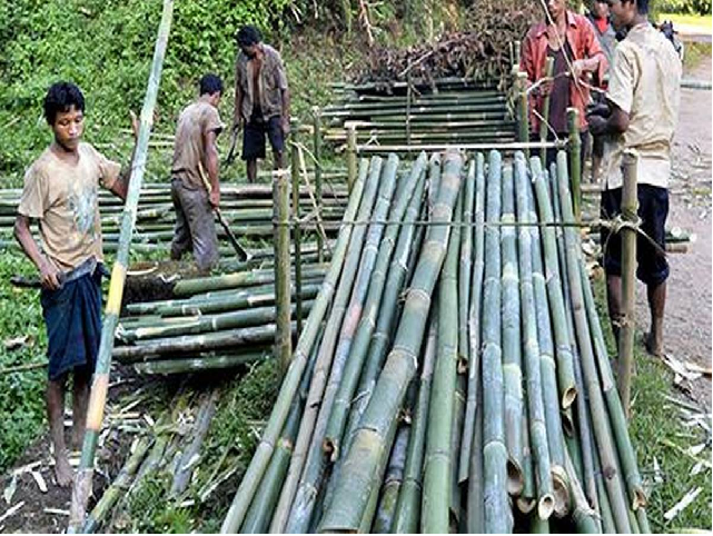 Profitable bamboo cultivation