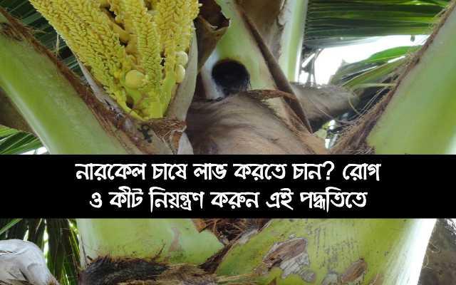 (coconut cultivation) নারকেল চাষে রোগ ও কীট নিয়ন্ত্রণ পদ্ধতি