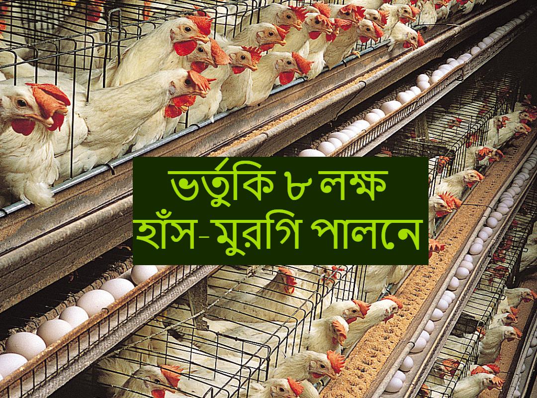 (Poultry farming) পোল্ট্রি ফার্মিংয়ের জন্য পাওয়া যেতে পারে রাজ্য সরকারের পক্ষ থেকে ৮ লক্ষ পর্যন্ত এককালীন ভর্তুকি