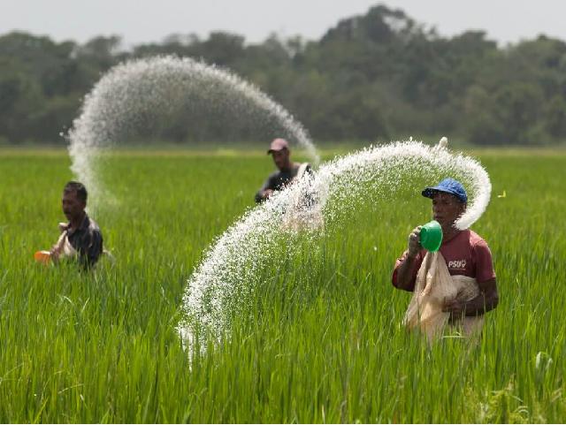 Spreading Fertilizer on crop