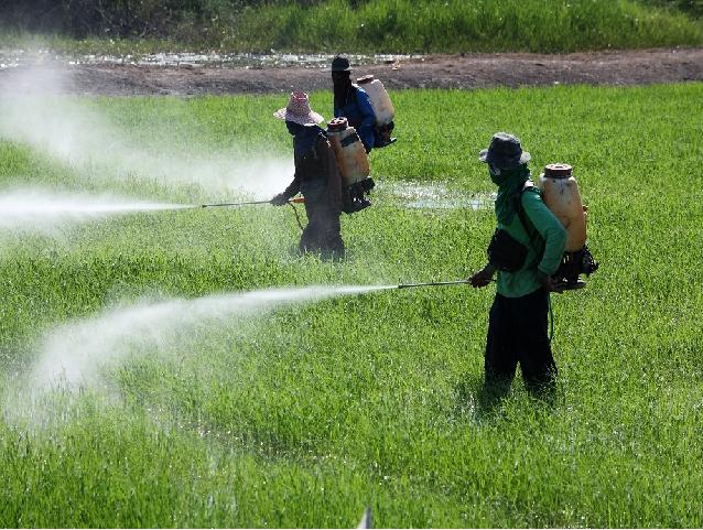 Spraying fertilizer on crop