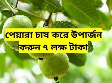 (Guava cultivation) এই প্রজাতির পেয়ারা চাষে আয় হবে লক্ষাধিক