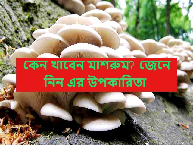 (Health benefits of Mushroom) পুষ্টিগুণে সমৃদ্ধ মাশরুম দেবে স্থূলত্ব থেকে সহজেই মুক্তি
