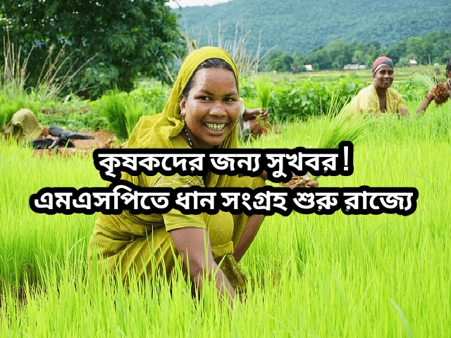 (Paddy collection at MSP) কৃষকদের জন্য রয়েছে বিশেষ সুখবর! আজ থেকে রাজ্যে এমএসপিতে ধান সংগ্রহ শুরু