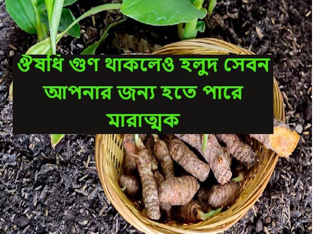 (Benefits of turmeric) ঔষধি গুণে সমৃদ্ধ হলুদ এই সকল রোগীদের জন্য হতে পারে মারাত্মক
