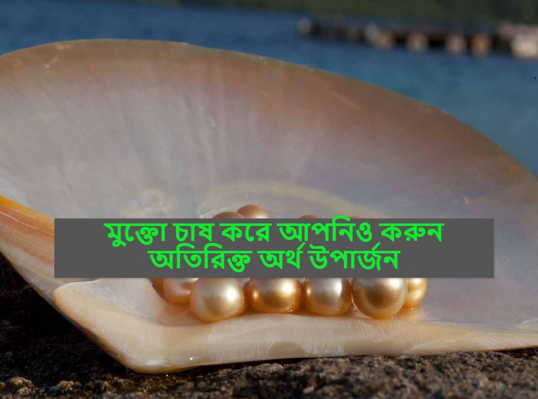 (Pearl cultivation) মুক্তো চাষ করে অতিরিক্ত অর্থ উপার্জন করছেন এই সফল কৃষক, প্রশংসা করেছেন প্রধানমন্ত্রী মোদী