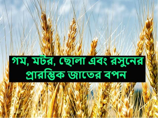 Crop varieties - গম, মটর, ছোলা এবং রসুনের উন্নত ফলনের জন্য এই জাতগুলি বপন করুন