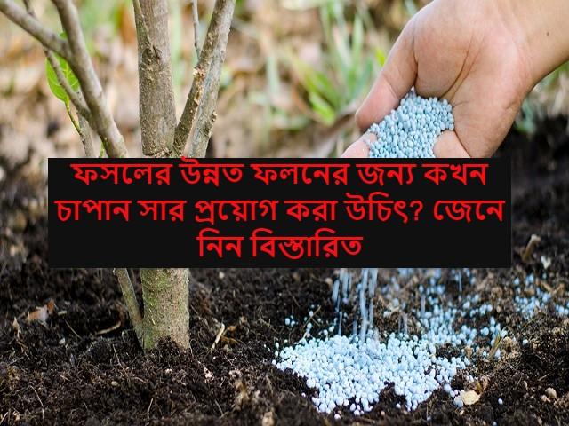 (New technology in crop cultivation) ফসলের উন্নত ফলনের জন্য এবং সারের খরচ কমাতে ব্যবহার করুন এই চাপান সার