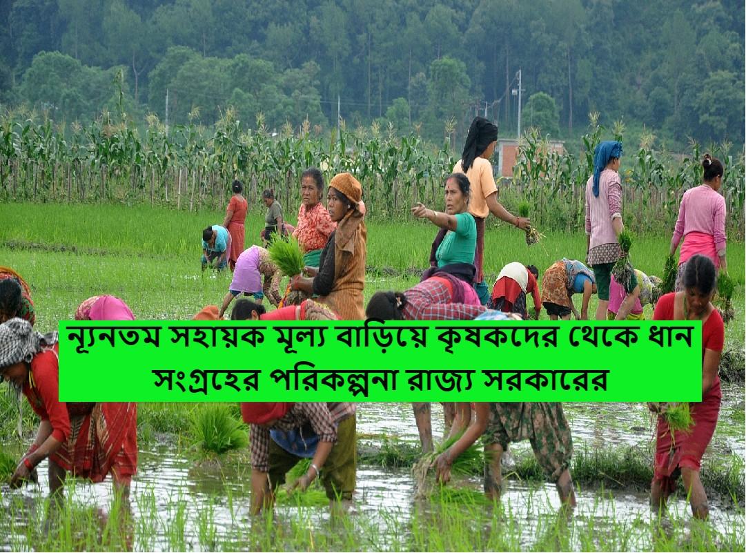 (Good news for farmers) পুজোর মরসুমে কৃষকদের জন্য বড় সুখবর! ন্যূনতম সহায়ক মূল্য বাড়িয়ে কৃষকদের থেকে আগামী মাস থেকে ধান সংগ্রহের পরিকল্পনা রাজ্য সরকারের