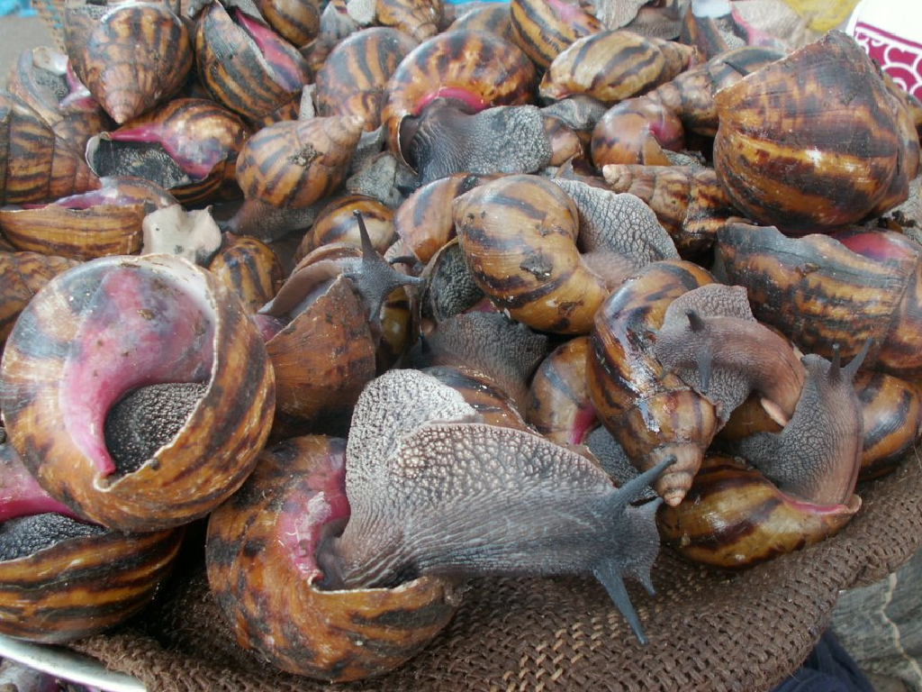 Profitable snail farming