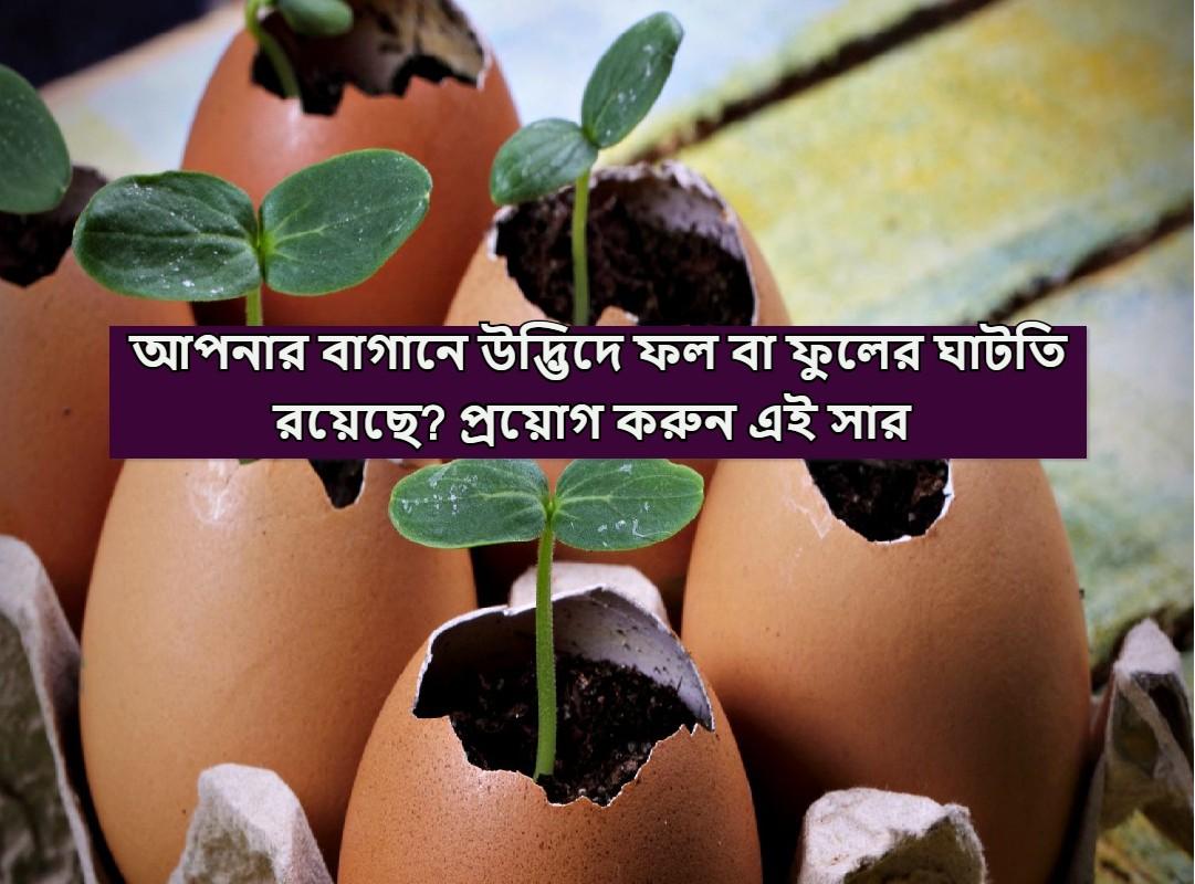 (Organic fertilizer) উদ্ভিদে কীটশত্রুর আক্রমণ? ডিমের খোসা থেকে তৈরি এই জৈব সার প্রয়োগ করে উদ্ভিদকে সহজেই রক্ষা করুন