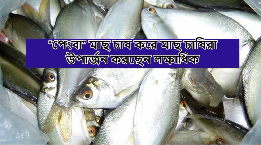 (Commercial cultivation of Pengba fish) মাছের সার্বিক উৎপাদন বাড়াতে রুই, কাতলার সাথে সাথী ফসল হিসেবে পেংবা মাছের বাণিজ্যিক চাষ