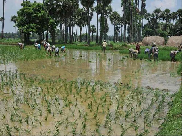 Submerged Paddy fields